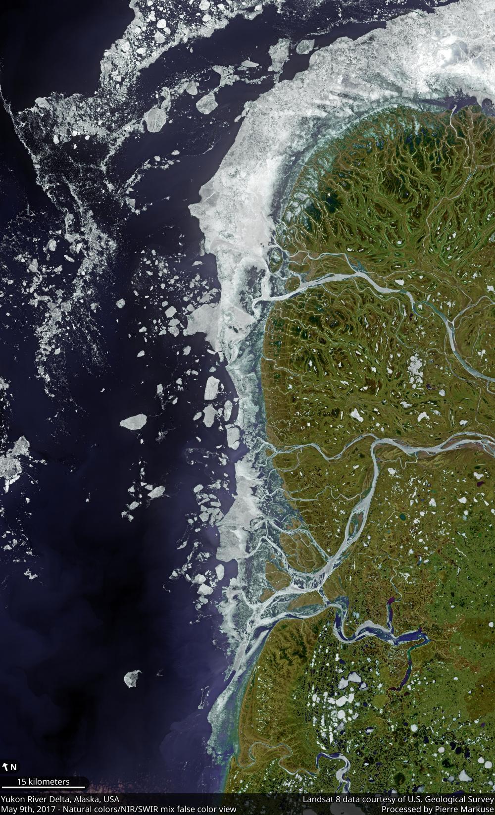 Yukon River delta, Alaska, USA
