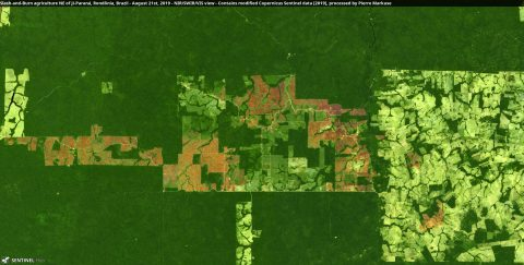 An example of slash-and-burn agriculture in Brazil